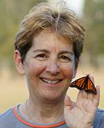 Icon of the event How to Raise Monarch Butterflies with Carole Pasternak