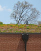 Icon of the event Ask an Expert - Green Roofs with Toronto Master Gardeners!