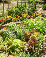 Icon of the event Ask an Expert: 15 Ways to Garden Large in Small Spaces