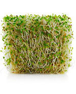 Icon of the event Healing with Sprouts - The Best Sprouts to Eat and Grow