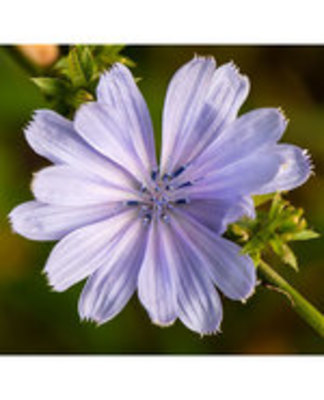 Icon of the event Plants That Bribe Ants & Other Little-Known Facts about Summer Wildflowers