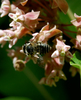 Grow Native Ontario Plants for the Bees!