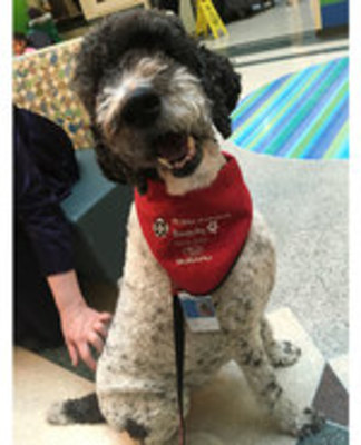 Icon of the event Therapy Dog Visit