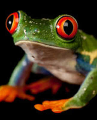 Icon of the event Puppet Show: Why Frogs Have No Tails